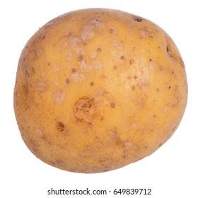 single potato isolated on white background