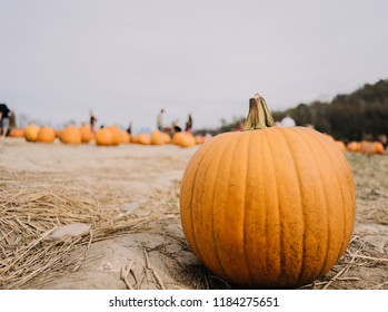 Single Pumpkin in Pumpkin patch