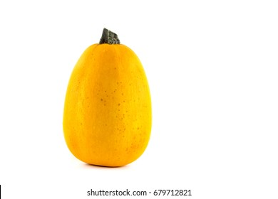 A single pumpkin (Spaghetti Squash) lies in front of a white background as a Cut-Outs