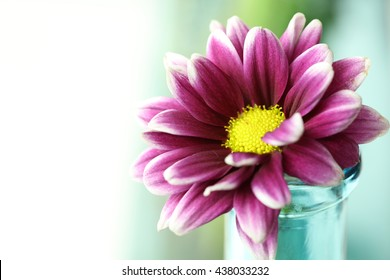 A single purple flower with a soft teal background.