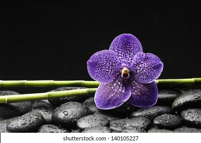 Single purple orchid with bamboo grove on stones