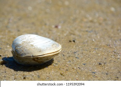Clams Images Stock Photos Amp Vectors Shutterstock