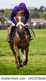 Single race horse and jockey sprinting on the race track
