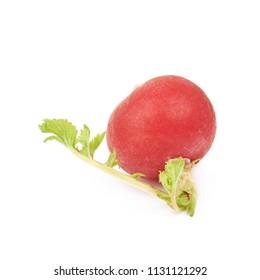 Single radish isolated over the white background