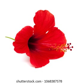 single red hibiscus flower isolated on white background