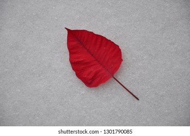 Single red poinsettia leaf in a snow backgrounds
