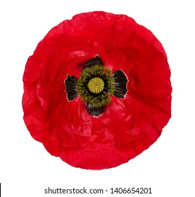 Single red  poppy isolated on white background. poppy cut out.