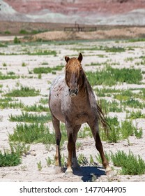 Single red roan wild horse with badlands in the background