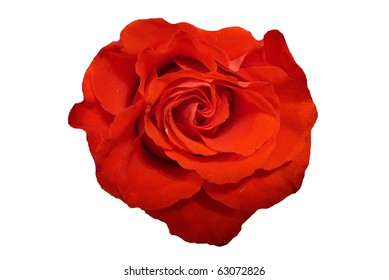 Single Red Rose Flower Isolated on White