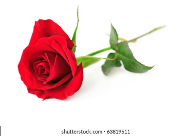 Single Red Rose Flower Isolated On Stock Photo (Edit Now) 63819511