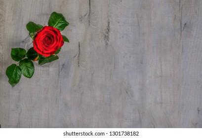 e6523ea02da0c Single red rose with fresh green leaves