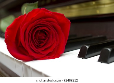 Single red rose on the piano keyboard