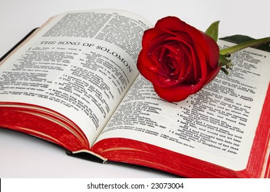 "A single red rose rests upon the pages of an old bible open to the romantic chapter, "" Song of Solomon"", on a white background."