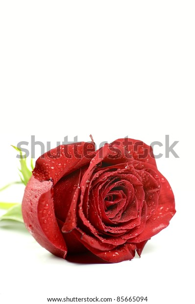 Single Red Rose. Separated. Vertical Photo