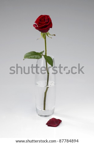 Single Red Rose Stems Glass Vase Stock Photo Edit Now 87784894