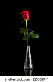 A single red rose in a vase, isolated against a black background