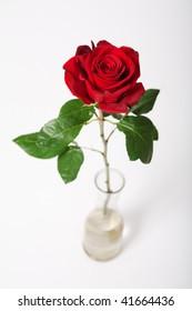 Single red rose in vase over white