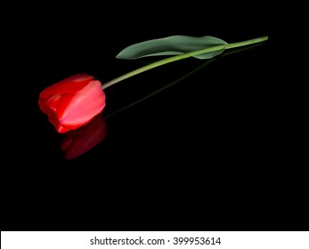Single red tulip with raindrops like tears. Lying on shiny black background with reflection. Ideal tribute, memorial, bereavement message etc. With copy space.