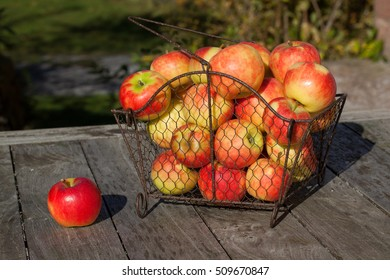 Single ripe apple and other apples in a wire basket on a wooden table outdoors.