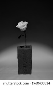 Single rose blackandwhite in a jar.  The rose's support is a clay brick.