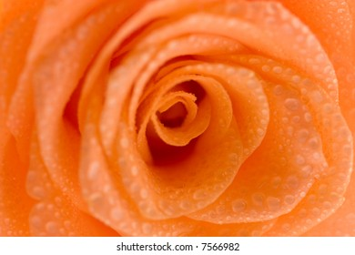 single rose close-up with droplets