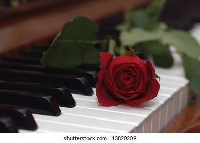 single rose placed over piano keys