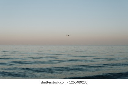 single seagull flying over calm sea during sunset