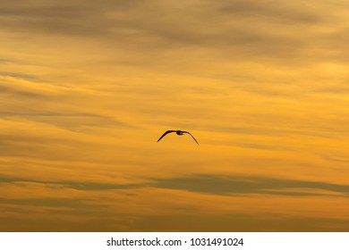 Single seagull flying in a vibrant yellow sky