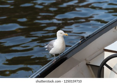 single seagull on a boat in the amsterdam canals