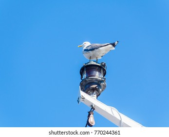 Single seagull seating on navigational lights of a ship against blue sky.