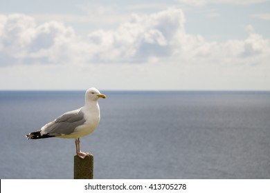 single seagull standing on a pole by the sea