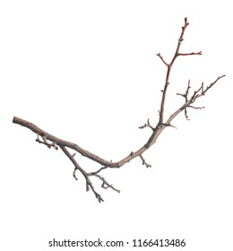 single silhouette of dry branch tree isolated on white background