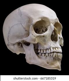 single skull isolated on black background