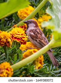 A single small sparrow is standing on a yellow flower with a side view