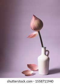 Single soft beautiful lotus flower in white vase with petals on the floor,copy space