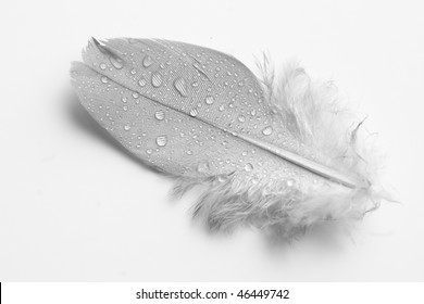 A Single Soft Wet Feather
