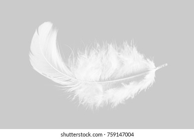 Single soft white feather isolated on grey background.