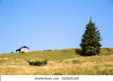 Single spruce close-up and little wooden house a bit further in a sunny summer day. Spruce and house against a blue sky. Bright picture with spruce and house. Landscape for postcards.