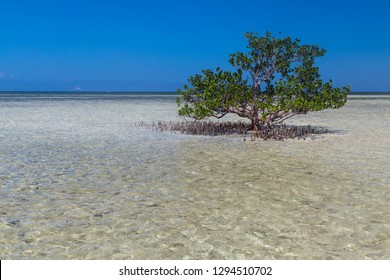 Single standing tree in shallow water on sunny day. White sand beach of Virgin island near Panglao, Bohol, Philippines
