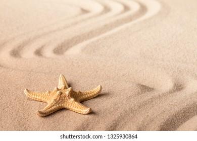 single starfish on sandy beach. One seastar on sand.
