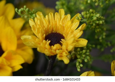 Single Sunflower close up with water droplets