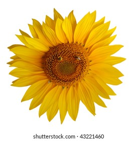 Single sunflower with two bee forming a smiley face