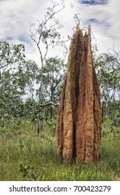 A single Termite Mound surround by bush