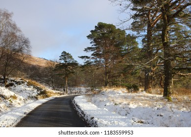 Single track road in winter in the Scottish Highlands with Scots Pine Trees at the roadside.