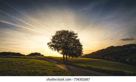 Single tree in autumn against blue sky at sunset, Germany