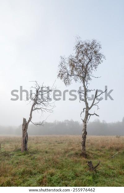 Single tree in the autumn field. Autumn Landscape