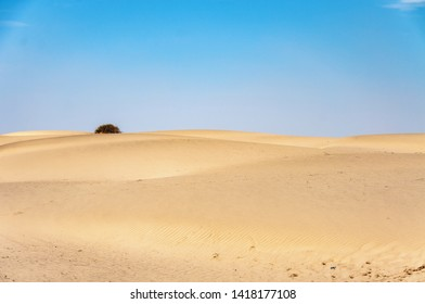 A single tree behind the sand dunes in the Thar desert
