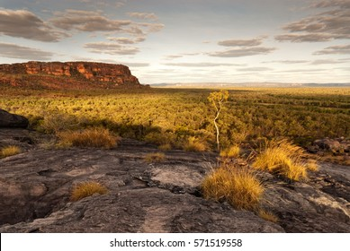 A single tree catches the last light at dusk in Nourlangie badlands, Kakadu National Park
