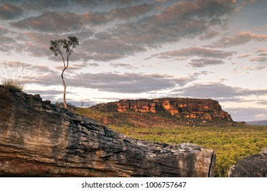 A single tree at dusk in the Nourlangie badlands, Kakadu National Park