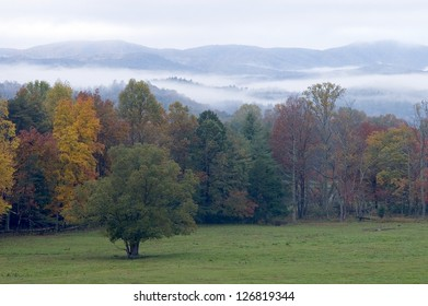 A single tree in a field with misty mountains in the background, Great Smoky Mountains National Park